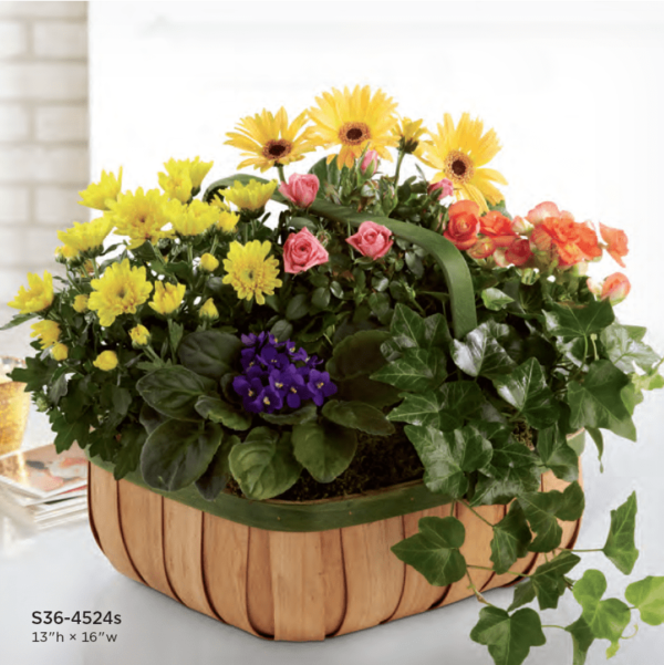 Basket S36-4524s